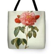 Rose La Duchesse Dorleans Tote Bag