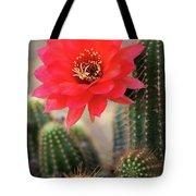 Rose Quartz Cactus Flower  Tote Bag
