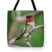 Ruby-throated Hummingbird In All His Glory Tote Bag