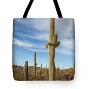 Saguaro Evening Sentry Tote Bag by Lon Dittrick