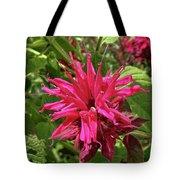 Scarlet Beebalm Tote Bag