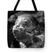 Sea Lion Pup Tote Bag by Edward Fielding