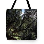 Secular Tree Tote Bag