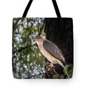 Shikra In The Wild Tote Bag