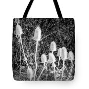 Silver Thistle Seed Pods Tote Bag