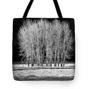 Silver Trees, Yosemite National Park Tote Bag