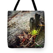 Small Spruce Growing On An Old Tree Stump Tote Bag
