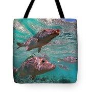 Snapper On Ningaloo Reef, Australia Tote Bag