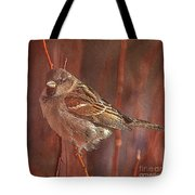 Sparrow In The Sunshine Tote Bag
