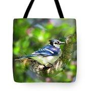 Spring Blue Jay Tote Bag