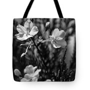 Spring Cherry Bw  Tote Bag by Keith Smith