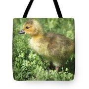 Spring Gosling Tote Bag
