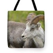 Stone's Sheep Ram Tote Bag