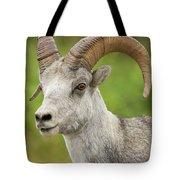 Stone's Sheep Ram Portrait Tote Bag
