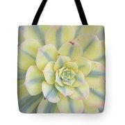 Succulent Aeonium Sunburst Tote Bag