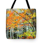 Sugar Maple Acer Saccharum In Autumn Tote Bag