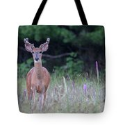 Summer Young Buck 1 Tote Bag
