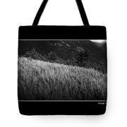Sunlight On Ferns Poster Tote Bag