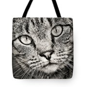 Tabby Cat Black And White Tote Bag by Peggy Collins