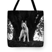 The Dog And The Tree Tote Bag