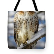 The Look, Red Tailed Hawk 1 Tote Bag by Michael Hubley