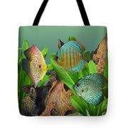 Three Discus Fish Tote Bag