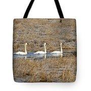 Three Trumpetor Swans 0629 Tote Bag