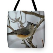 Titmouse Winter Morning Cutie  Tote Bag