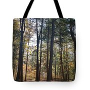 Trees And Shadows 2 Tote Bag