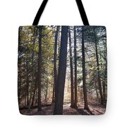Trees And Shadows  Tote Bag