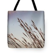 Turkey Foot Grass At Sunset Tote Bag