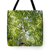 Under The Tall Aspens Tote Bag