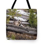 w75 Tote Bag by Joshua Able's Wildlife