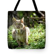 Watchful Mama Lynx Tote Bag by Tim Newton