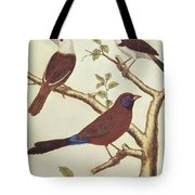 White Headed Munia, Double Coloured Seed Eater And Violet Eared Waxbill Tote Bag