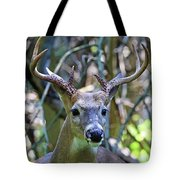 White Tailed Buck Portrait Tote Bag