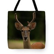 White-tailed Deer - 8282-2 Tote Bag