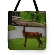 White Tailed Doe Tote Bag