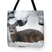 Whitetail Deer In Snow 120502 Tote Bag by Rick Veldman