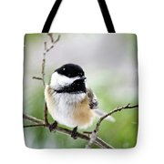 Winter Black Capped Chickadee Tote Bag