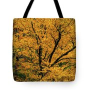 Yellow Tree Leaf Brilliance  Tote Bag by Claire Turner