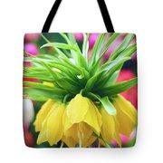 Yellow Tulip Close Up Tote Bag