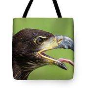 Young Bald Eagle 2 Tote Bag