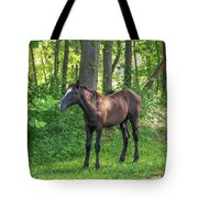 Young Brown Colt Tote Bag