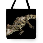 Young Cayman Crocodile, Reptile With Opened Mouth And Waved Tail Isolated On Black Background In Top Tote Bag