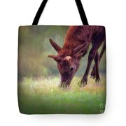 Young Elk Grazing Tote Bag