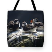 Young Puffins On Clifftop. Tote Bag by David Birchall