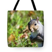 Your Friendly Neighborhood Squirrel Tote Bag