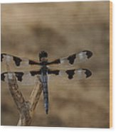 12 Spotted Skimmer Wood Print
