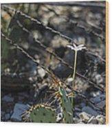 A Flower Among Thorns Wood Print